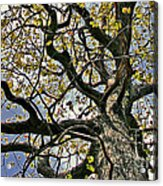 Cemetery Oak Acrylic Print