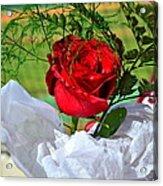 Centenary Rose Acrylic Print