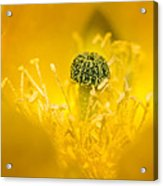 Center Of A Yellow Cactus Flower Acrylic Print