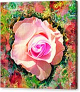 Center Of Attention Acrylic Print
