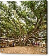 Central Court - Banyan Tree Park In Maui. Acrylic Print