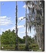 Central Florida Wetlands Acrylic Print