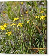 Central Florida Wildflowers Acrylic Print