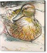 Central Park Duck On The Rocks Acrylic Print