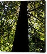 Central Park Trees 7 Acrylic Print