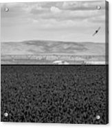 Central Washington, Usa. A Crop Duster Acrylic Print
