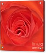 Centre Of A Rose Acrylic Print