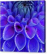 Centre Of Blue And Purple Dahlia Flower Acrylic Print