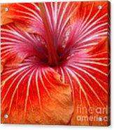 Centre Of Bright Orange Hibiscus Acrylic Print