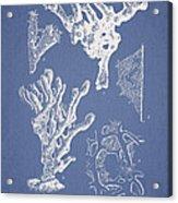 Ceratodictyon Spongiosum Zanard Acrylic Print
