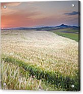 Cereal Fields Acrylic Print