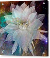 Cereus Chaos Acrylic Print by Tanya Hamell