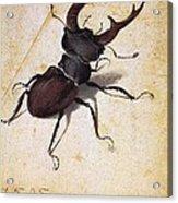Cervus Lucanus Acrylic Print