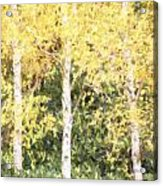 Cezanne Style Digital Painting Beautiful Autumn Color In Forest Acrylic Print