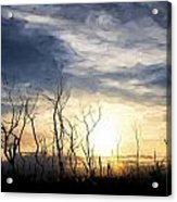 Cezanne Style Digital Painting Stark Bush Silhouette Against Stunning Sunset Sky Acrylic Print