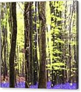 Cezanne Style Digital Painting Vibrant Bluebell Forest Landscape Acrylic Print