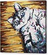 Chachi Cat Portrait Acrylic Print