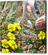 Chafer Beetle On Medusa Succulent In 3d Stereo Acrylic Print