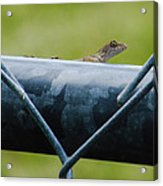 Chain Link Highway Acrylic Print