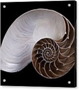 Chambered Nautilus Cross-section Acrylic Print