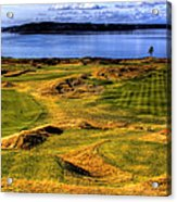 Chambers Bay Lone Tree Acrylic Print by David Patterson