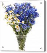 White Camomile And Blue Cornflower In Glass Vase  Acrylic Print