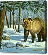Chance Encounter - Grizzly Acrylic Print