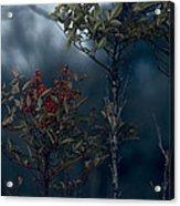 Change Of Season Acrylic Print by Bonnie Bruno