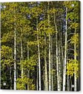 Changing Colors Acrylic Print by Tom Wilbert