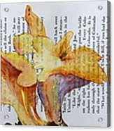 Chanterelles Acrylic Print