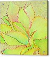 Chantilly Lace Acrylic Print