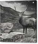 Charcoal Drawing Image Red Deer Stag In Moody Dramatic Mountain Sunset Landscape Acrylic Print
