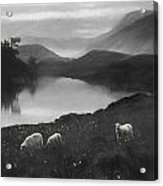 Charcoal Drawing Image Sheep In Field At Sunrise Landscape With Mountains And Lake In B Acrylic Print