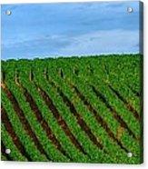 Chardonnay Sky 17990 Acrylic Print