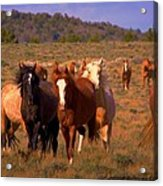 Charge Of The Mustangs  Acrylic Print by Jeanne  Bencich-Nations