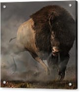 Charging Bison Acrylic Print by Daniel Eskridge