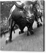 Charging Bull 2 Acrylic Print by Tony Cordoza