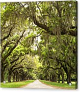 Charleston Avenue Of Oaks Acrylic Print