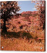 Charons Garden Wilderness Acrylic Print