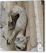 Chartres Cathedral Dog Gargoyle Acrylic Print
