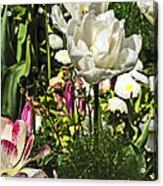 Chartres Garden White Acrylic Print