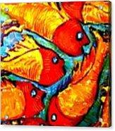 Chasing Red Fish Acrylic Print