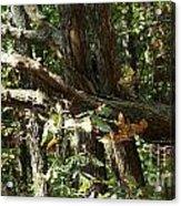 Chattahoochee River Trails Acrylic Print