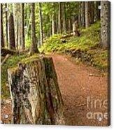 Cheakamus Lake Trail Acrylic Print
