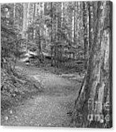 Cheakamus Trail In Black And White Acrylic Print