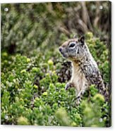Checking Things Out Acrylic Print