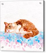 Cheeky Cat Acrylic Print