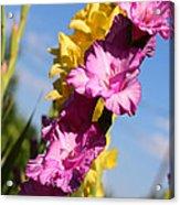 Cheerful Gladiolus Acrylic Print