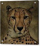 Cheetah Face Acrylic Print