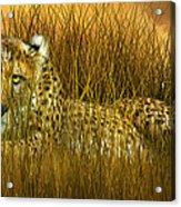 Cheetah - In The Wild Grass Acrylic Print
